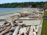 Driftwood on the Victoria Beach